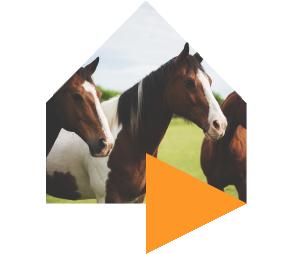 horse%403x