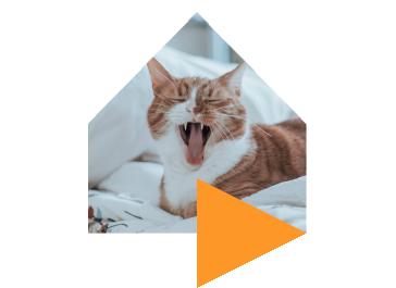 cats%403x
