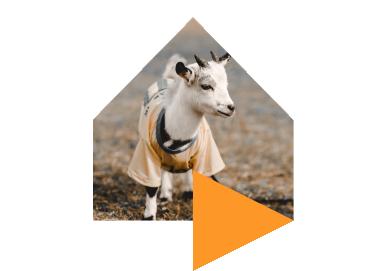 Goat%403x